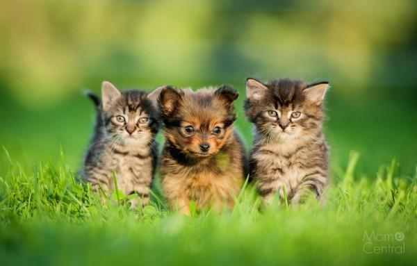 ASPCA #HappyHOWLidays Event! {10% off adoption fee code!}