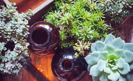 Why Succulents are Fabulous