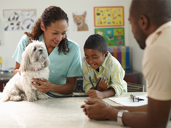 Family Pets – Are You Ready for One?